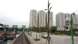 Hà Nội: Hàng loạt cây xanh trên 1 tuyến phố chết khô