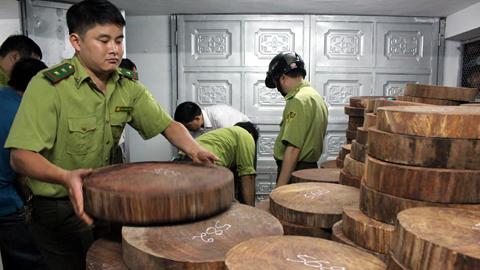 Hà Giang: Bắt giữ hơn 1.000 khúc gỗ nghiến dạng thớt