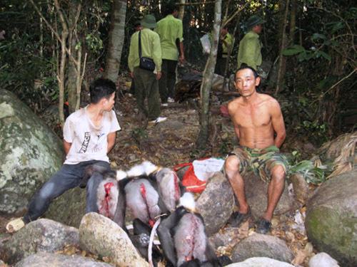 Trạm trưởng kiểm lâm bị thợ săn đâm thủng bụng