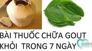 Dùng dừa xiêm và lá trầu đánh bay bệnh gout trong vòng 7 ngày