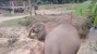 Bài học voi mẹ giúp voi con khiến vạn người yêu mến
