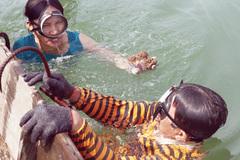 """Săn """"viagra"""" dưới đáy sông Nhật Lệ"""