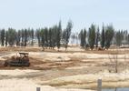 Phú Yên: Phá rừng phòng hộ làm sân golf, thi hoa hậu