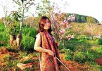 Nữ phó giám đốc sở bẻ hoa bị kỷ luật Đảng