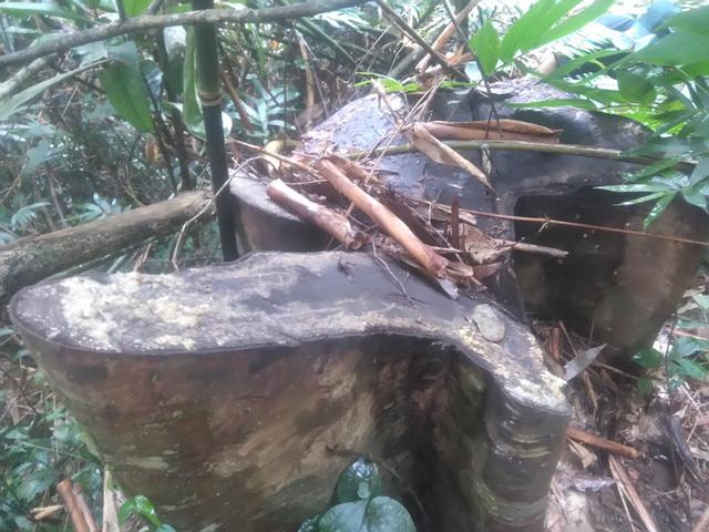 'Xới tung' rừng để tìm đá quý