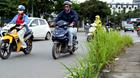 Cây dại lại mọc tốt um khắp phố Hà Nội