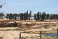 Phá rừng phòng hộ- Phú Yên coi thường phép nước?
