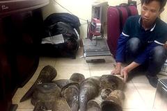 Ông trùm buôn bán sừng tê giác Việt Nam bị bắt giữ