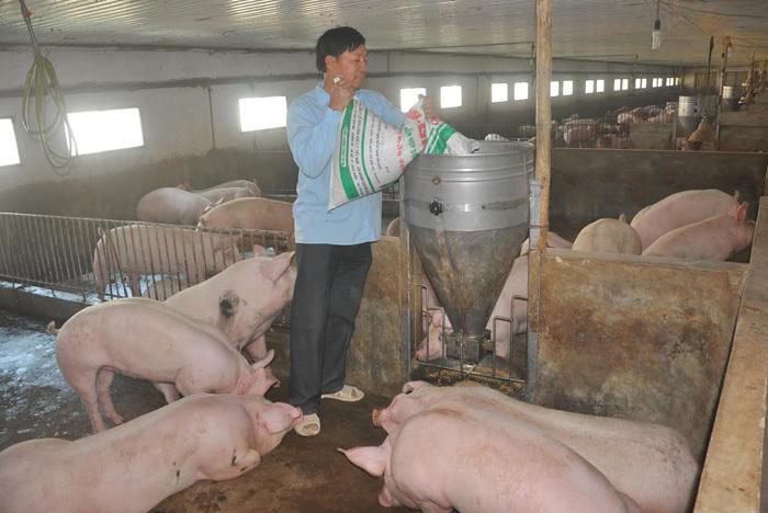 Bộ ngành đồng loạt vào cuộc giải cứu thịt lợn
