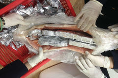 Quái chiêu buôn lậu ngà voi dấu trong bụng cá hồi