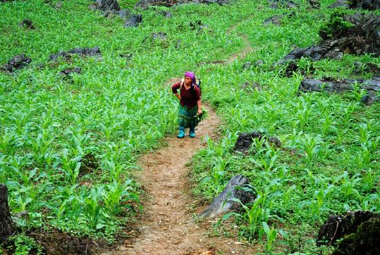 'Mỏ vàng' lộ thiên: Cánh rừng nghiến, trai cổ thụ nghìn năm tuổi