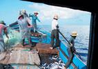 Việt Nam bác bỏ lệnh cấm đánh bắt cá của TQ ở Biển Đông