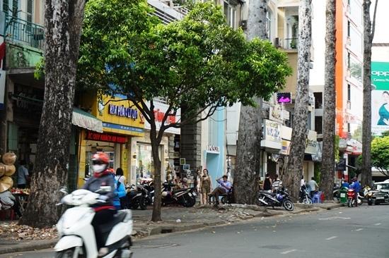 Đốn hạ, di dời 28 cây xanh để làm metro Bến Thành - Suối Tiên
