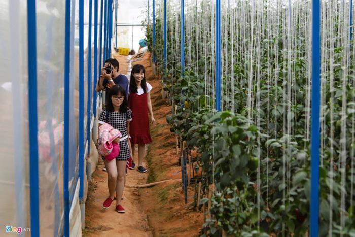 Trang trại dưa hấu tí hon 10 mùi ở Đà Lạt