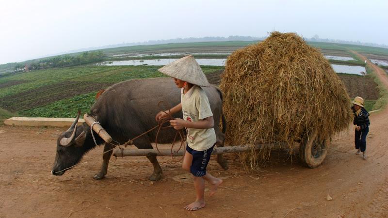hợp tác xã,tái cơ cấu nông nghiệp