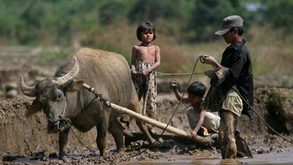 hợp tác xã,TS Đặng Kim Sơn, tái cơ cấu nông nghiệp