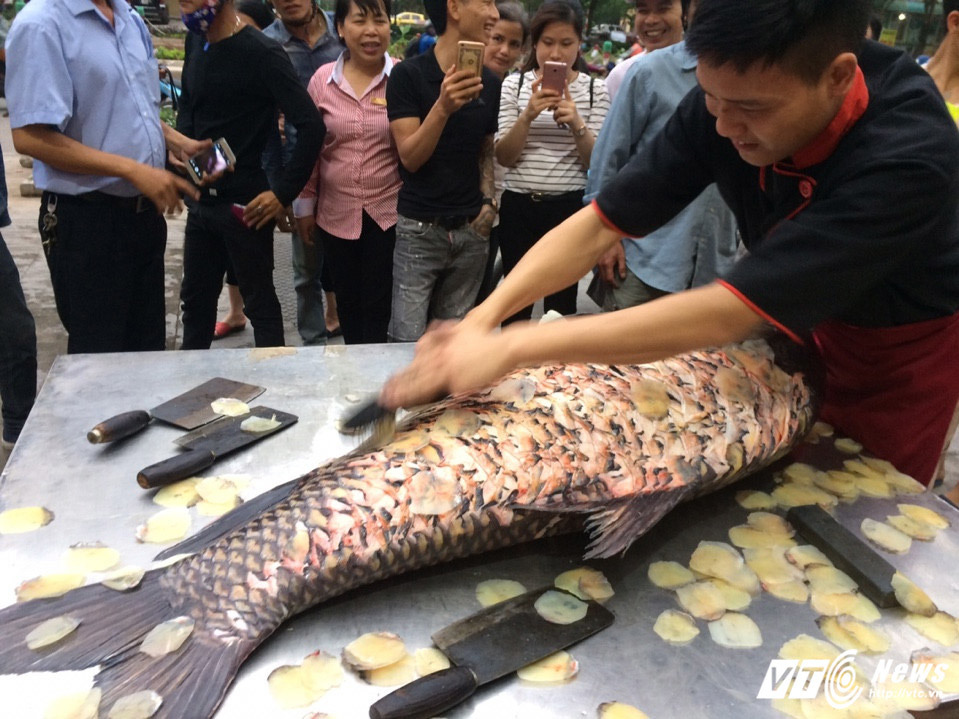 cá khủng, cá hô, cá quý hiếm, thủy quái, cá khổng lồ,