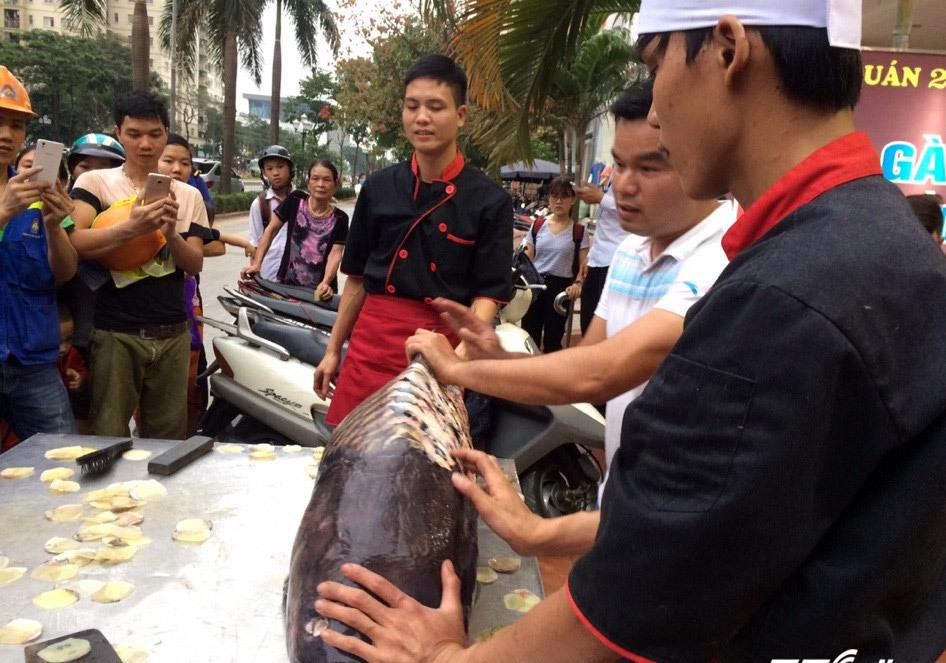 'Siêu thủy quái' cá hô 200 triệu đồng xuất hiện ở Hà Nội