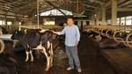 Tỷ phú bò sữa và giấc mơ thoát khỏi 'ao làng'