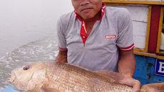 Ngư dân bắt được cá 7 kg, nghi là sủ vàng quý hiếm
