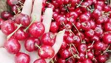 Cherry Trung Quốc 90 ngàn/kg bán tràn lan