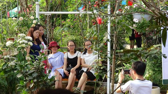 Vườn hồng cổ 2 vạn gốc quý hiếm bậc nhất Hà Nội