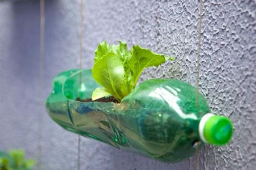 Ăn mệt nghỉ rau sạch nhờ kỹ thuật trồng từ vỏ chai nhựa cũ