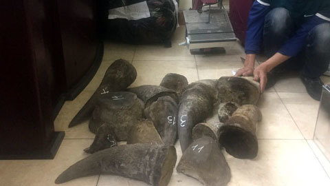 Khởi tố trùm buôn sừng tê, ngà voi từ châu Phi về Việt Nam