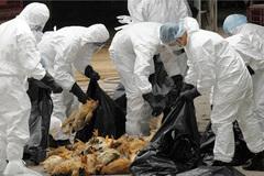 Phát hiện virus cúm H7N9 lây truyền nhanh gấp 1.000 lần