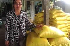 Sóc Trăng: Lái lúa 'ôm' 10 tỷ của nông dân rồi biến mất