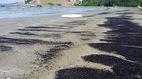 Chất thải lạ màu đen dạt đầy bờ biển Nghệ An