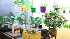 """Nhà chật đến đâu cũng trồng được những loại rau quả """"dễ tính"""" này"""