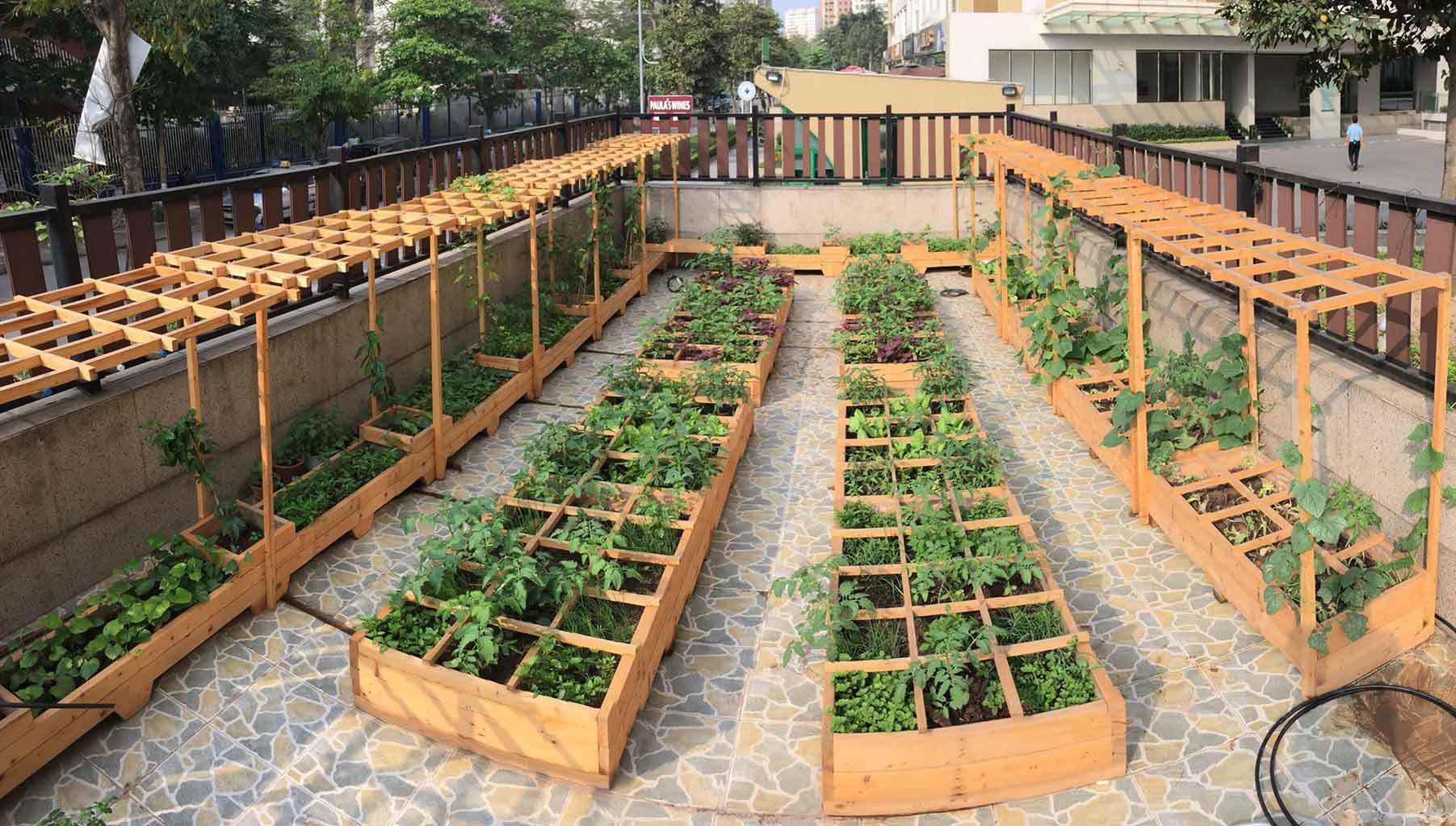 Nhà giàu Hà thành khoe vườn rau sạch đẹp như shop hoa 'vạn người mê'