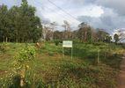 Cấp sổ đỏ trên đất rừng cho nguyên thường vụ, kỷ luật 9 cán bộ