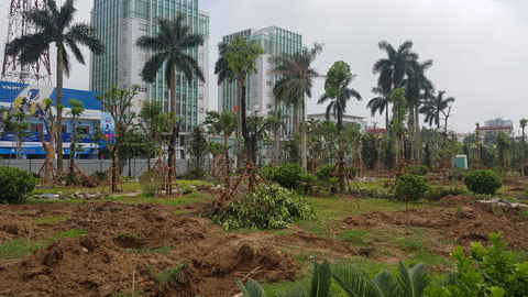 Thái Bình trồng lại cây xanh vườn hoa sau khi di dời hàng loạt