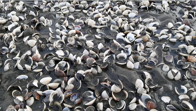 cá chết, cá chết hàng loạt, cá chết ở Kiên Giang
