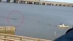 Cá sấu giận dữ truy sát người chèo thuyền