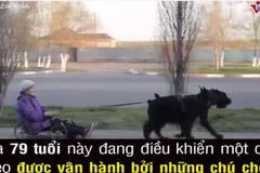 Cụ già cưỡi xe chó gây thích thú