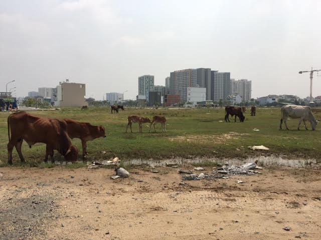 Điểm mặt 5 thủ phạm gây 'sốt ảo' đất nền Sài Gòn