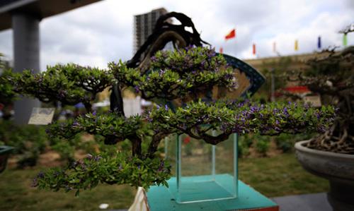 Triển lãm cây cảnh tuyệt đẹp ở Hải Phòng