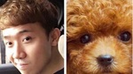 Tóc mới của Trấn Thành được fan so sánh với cún