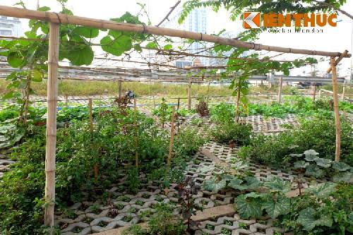 trồng rau, đường vành đai 2, đường giao thông