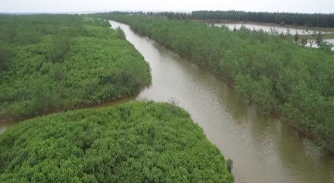 quai đê lấn biển, rừng phòng hộ, tỉnh Thái Bình, kinh tế hướng biển