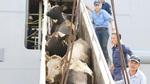 Vinamilk nhập hơn 2.000 bò sữa cao sản từ Mỹ