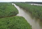 Thái Bình xin di dời 150ha rừng làm dịch vụ