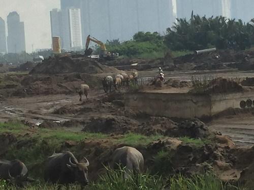 Lãng tử ngủ ống cống, chăn trâu giữa Sài Gòn