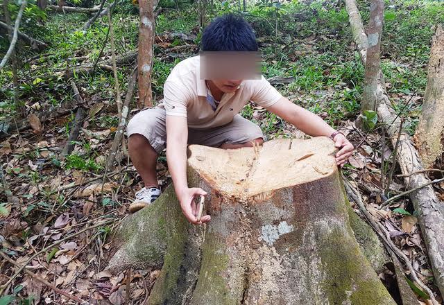 Thanh Hóa: Rừng nguyên sinh bị đốn hạ không thương tiếc