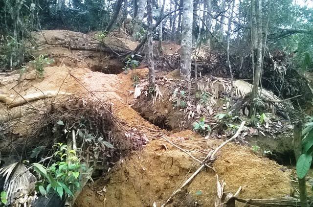 rừng nguyên sinh,lâm tặc,phá rừng,Thanh Hóa