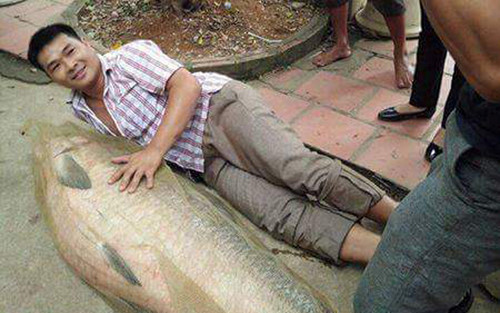 Hàng loạt cá trắm đen 'khổng lồ' được cần thủ Hà Nội câu lên bờ