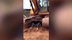 Người đàn ông gây sốc vì nâng tạ bằng... máy xúc 30 tấn